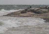 Blakeney Seals